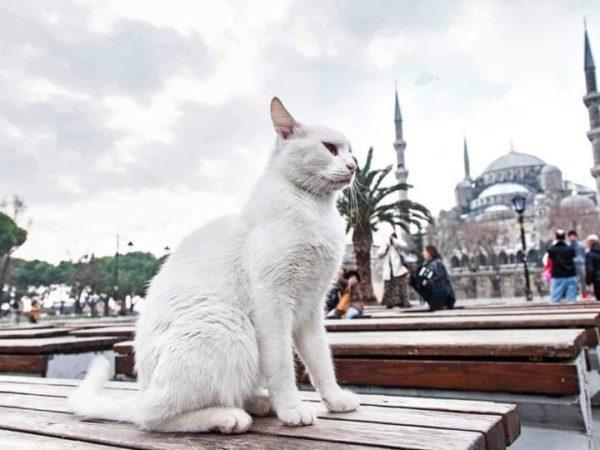 Istanbul-Sultanahmet Cat