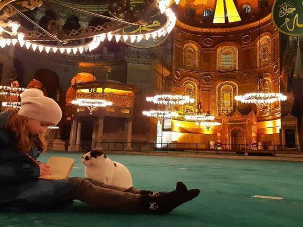 Istanbul Hagia Sophia Cat
