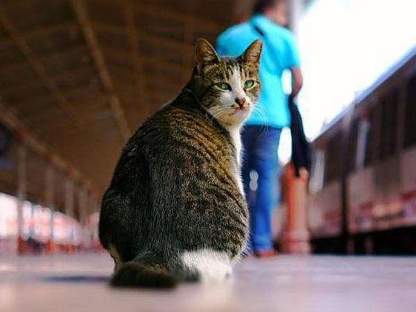 Sirkeci Train Station Cat